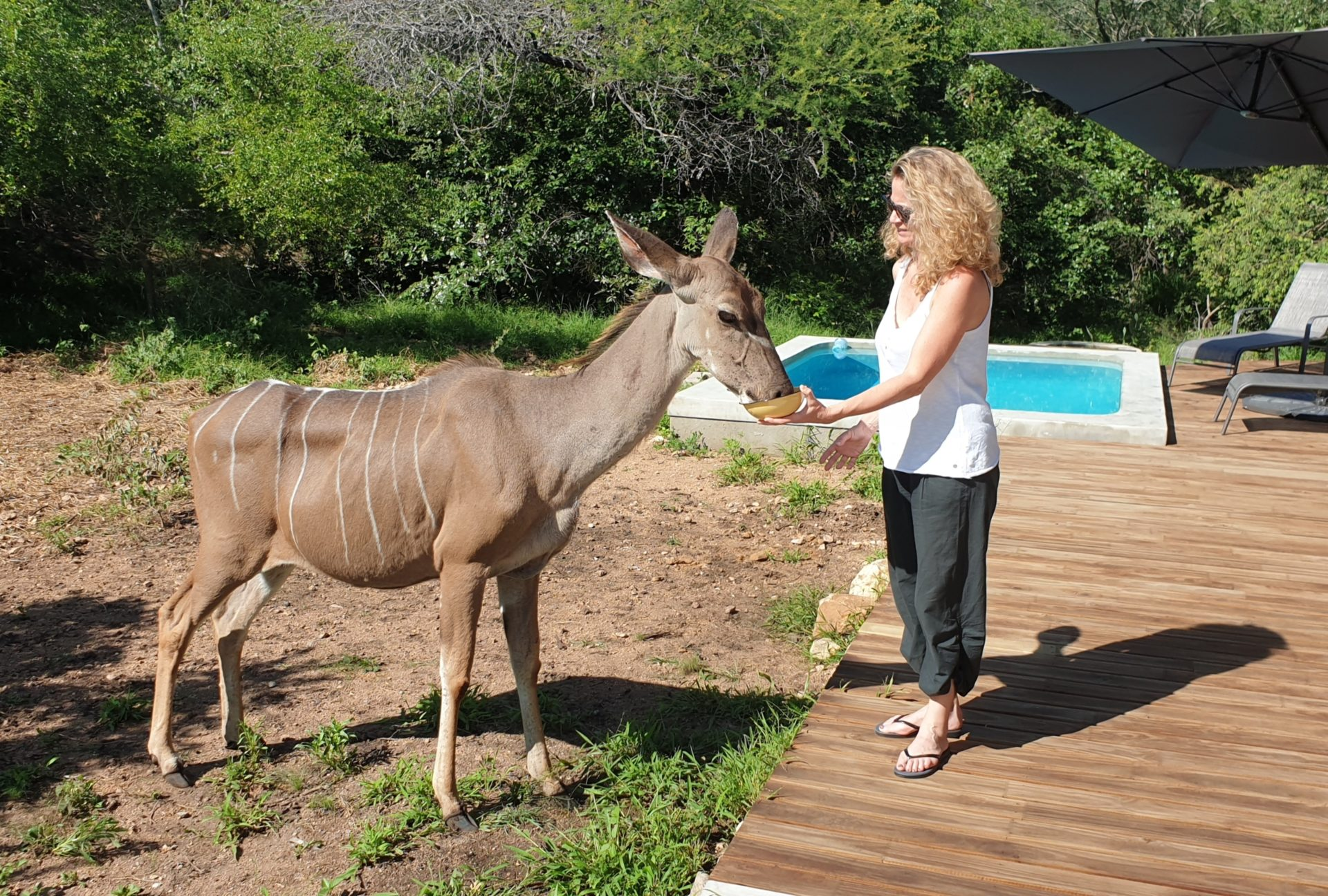Leadwood Self Catering Guesthouse in Marloth Park, Mpumalanga, South Africa. Wildlife interactions in Marloth Park